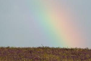 arcobaleno001big