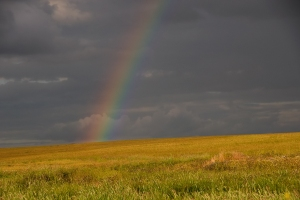 arcobaleno002big